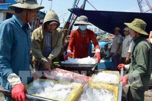 Đà Nẵng thí điểm đấu giá hải sản, chủ tàu chưa sẵn sàng