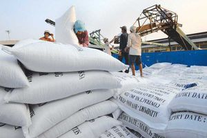 Sản xuất và xuất khẩu gạo giai đoạn mới, đề cao vai trò của doanh nghiệp