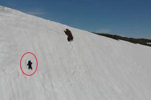 Cảm động cảnh gấu con cố leo lên núi tuyết để đến bên gấu mẹ