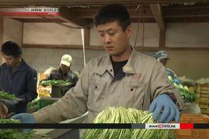Nhật Bản thông qua dự luật tiếp nhận thêm lao động nước ngoài