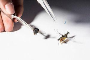 Khám phá robot không dây, tự bay và nhỏ như con ruồi