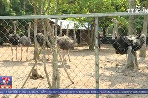 Chấn chỉnh việc nuôi động vật kiểu 'ngược đãi'