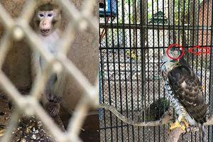 Cận cảnh thú nuôi bị cho là ngược đãi 'sống không bằng chết' tại công viên Củ Chi