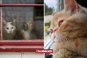 20 bức ảnh mèo 'mong mẹ về chợ' khiến bạn 'tan chảy' vì quá dễ thương