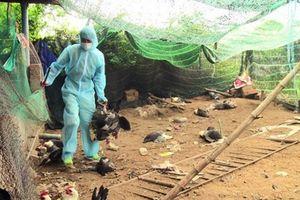 Phân bổ khẩn cấp 5.000 lít thuốc dập dịch cúm gia cầm