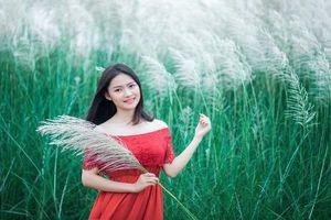 Tuyệt đẹp, bãi lau Thanh Chương hút hồn giới trẻ xứ Nghệ