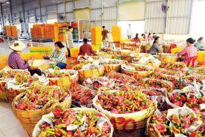 Nhiều nhà máy chế biến rau quả quy mô lớn sắp đi vào vận hành