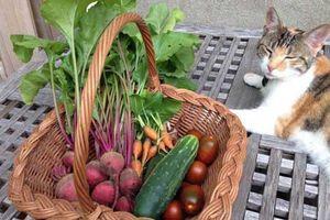 Khu vườn đầy rau xanh và trái ngọt của người phụ nữ bỏ việc giáo viên về làm vườn