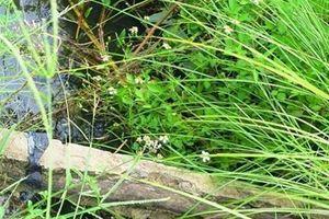 Thông tin mới về vụ bò chạy trượt chân làm lộ cốt gỗ tại kênh thủy lợi ở Bình Định