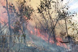 Yên Bái tăng cường phòng chống cháy rừng trong mùa hanh khô