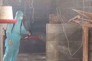 Phú Yên: Tiêu hủy toàn bộ gia cầm tại ổ dịch do chủng vi-rút cúm A/H5