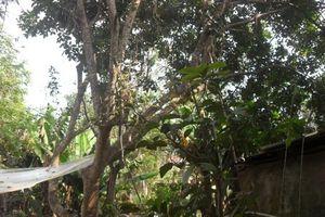 Đắk Lắk: Chủ tịch xã Cư Bao tử vong chưa rõ nguyên nhân