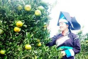 Xây dựng thương hiệu nông sản ở huyện vùng cao Mường Khương
