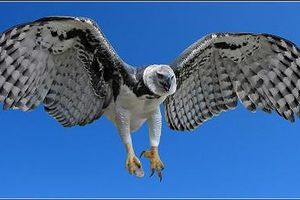 Bí ẩn loài chim khổng lồ, 'chúa tể' bầu trời