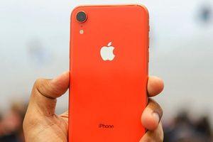 Apple đột ngột giảm lượng sản xuất iPhone XR, vì đâu nên nỗi?