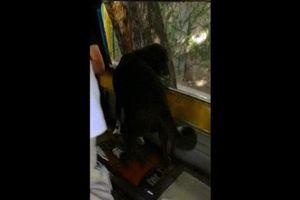Chó lên xe buýt một mình, theo sát xe tải chở chủ nhân