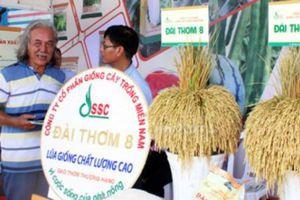 Festival lúa gạo lần 3: Cơ hội định vị giá trị hạt gạo Việt Nam