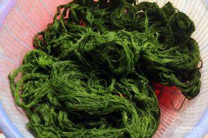 Mùa lấy rêu đá làm món ăn ở vùng cao Nghệ An