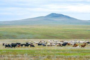 Mông Cổ, bản hùng ca của thảo nguyên bất tận