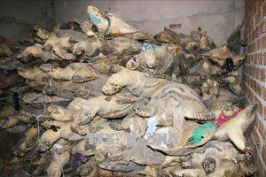 Buôn bán luôn cả rùa nằm trong Sách đỏ và rắn hạn chế khai thác thương mại