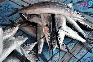 Thương lái Trung Quốc 'tung chiêu' mua cá lìm kìm với giá 3 triệu 1 kg để 'đầu độc' bà con miền Tây