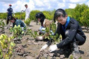 Bà Rịa – Vũng Tàu: Đầu tư hơn 100 tỷ đồng phục vụ trồng rừng