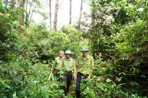 Tổ chức tốt các hoạt động tuyên truyền nhân kỷ niệm 59 năm ngày Lâm nghiệp Việt Nam
