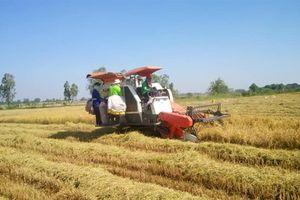 Bộ Công Thương: Thị phần gỗ Việt Nam giảm tại thị trường EU