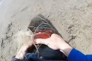 Hai chàng trai đuổi bắt, giải cứu hải cẩu vướng vào vòng nhựa