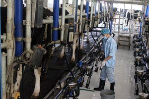 Ngành chăn nuôi Hà Nội: Chủ động hội nhập