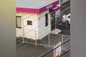 Nhật Bản: Đang đi trên phố thì bị lợn rừng lao đến tấn công dữ dội