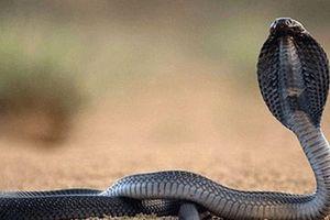 Thực hư 'rắn chúa bà' xuất hiện tại ngôi miếu đang xây dở ở Điện Biên