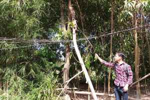 Thừa Thiên Huế: Dân bất an vì đường dây điện 'treo' hơn 20 năm
