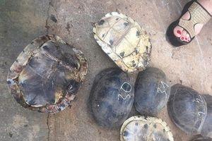 Kon Tum: Điều tra làm rõ vụ vận chuyển gần 500 kg rùa, rắn quý hiếm