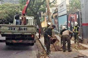 Bằng lăng đổ vào xe Camry ở Hà Nội