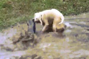Video chó bắt cá khổng lồ tài tình ở hồ Mỹ