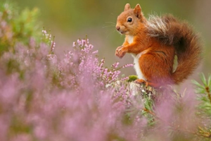 Anh: Những bức ảnh ấn tượng trong loạt giải về động vật hoang dã 2018