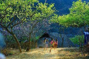 Hãy cứu lấy thiên nhiên Việt Nam! (Phần cuối)