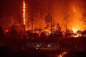 Cháy rừng lan nhanh, sơ tán khẩn cấp 26.000 dân