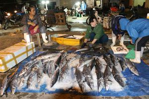 Nhộn Nhịp chợ Cảng cá Cửa Lò