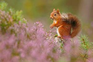 Những bức ảnh ấn tượng trong loạt giải về động vật hoang dã 2018 ở Anh