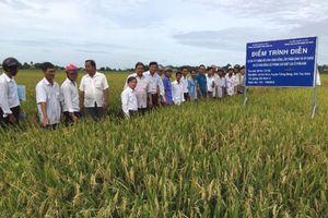 Cơ giới hóa đồng bộ ở Tây Ninh: Giảm chi phí, tăng năng suất