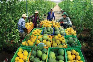Việt Nam nỗ lực thực hiện các mục tiêu phát triển bền vững