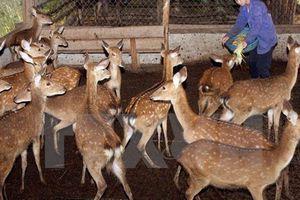 UBND tỉnh Hà Tĩnh kiến nghị bổ sung con hươu sao ra khỏi 'Danh mục động vật rừng thông thường'