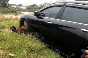 Chủ xe bất ngờ khi 'bắt quả tang' thủ phạm làm xước sơn ôtô