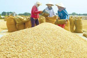 Tập đoàn gạo lớn nhất nước Úc mua nhà máy chế biến gạo ở Đồng Tháp