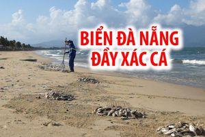 Kinh hoàng: Cá chết hàng loạt, dạt vào trắng bãi biển Đà Nẵng
