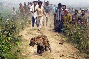 Hơn 1.000 người Ấn Độ thiệt mạng vì động vật hoang dã