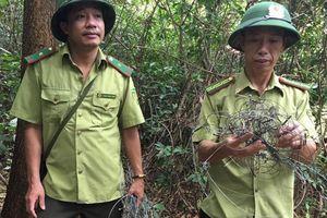 Hà Tĩnh: Cứ đi 10m là gặp 1 bẫy thú rừng trên núi Hồng Lĩnh