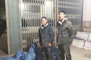 Quảng Ninh: Bắt giữ vụ vận chuyển trái phép hơn 300 kg thịt lợn